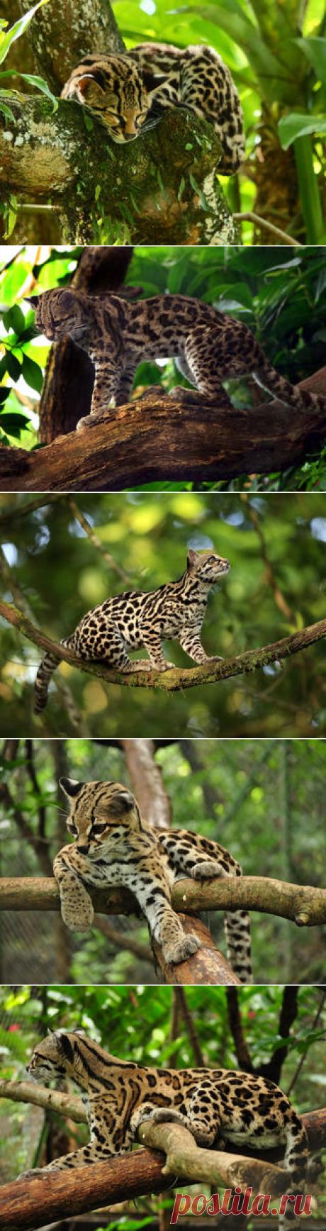 Смотреть изображения маргаев | Зооляндия