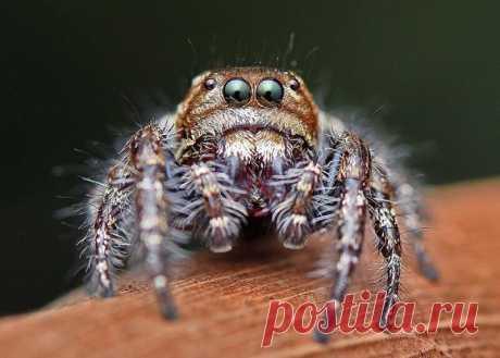 Портреты пауков от Павана Таврекере