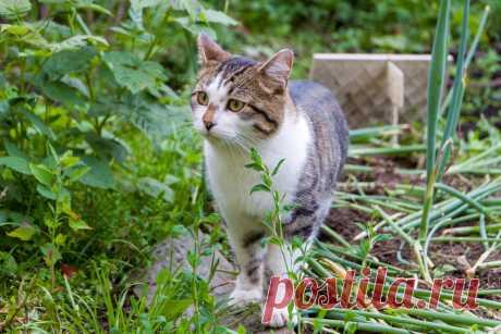 Как отвадить кошек вредить в саду? Действенные и безопасные методы. Фото — Ботаничка.ru