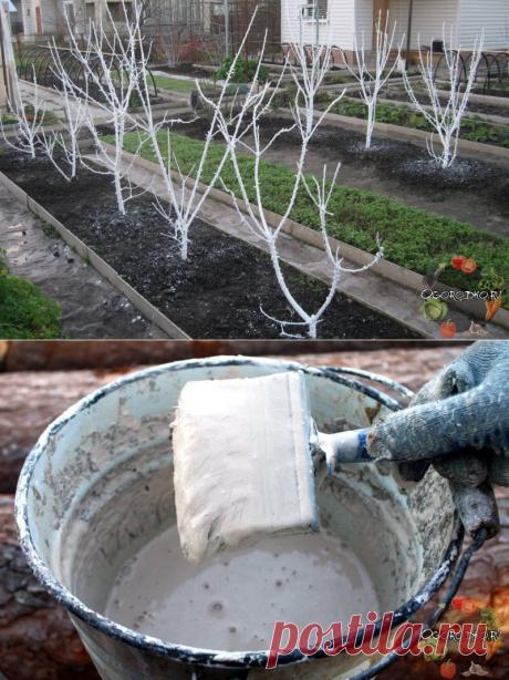 Побелка деревьев осенью – чем белить, как приготовить побелку, состав, пропорции + фото