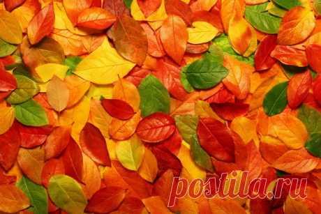 В какие народные приметы верили осенью?
