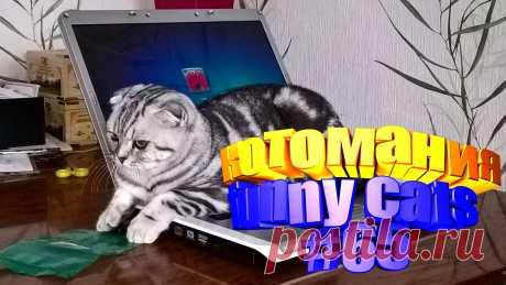 видео коты смешные, видео котов смешные, видео смешной кот, кот видео смешное, видео коты приколы, видео про котов, видео приколы котов, коты видео приколы, видео о котах, животные смешные видео, животное смешное, животные видео смешное, про смешных животных, смешное животные, приколы с котами, прикол с котом, кота приколы, смешные кошки, кошки видео смешные, смешные кошки видео, смешные про кошек, смешных кошек, кошка смешное видео, смешно кошка, видео кошки смешные, смешные кошка, видео кошек