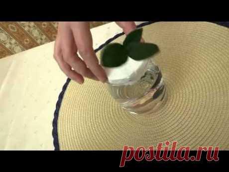Как укоренить черенок комнатного растения