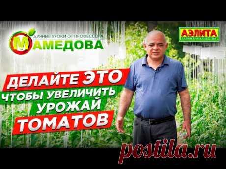 ПРОСТО! Чтобы увеличить урожай томатов, нужно опрыскивать томаты. Пример как опрыскивать помидоры