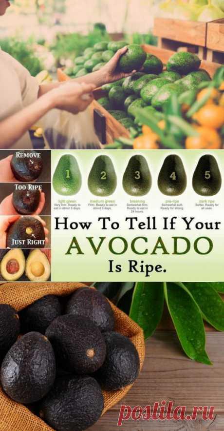 (+1) тема - Как правильно выбирать авокадо | Среда обитания