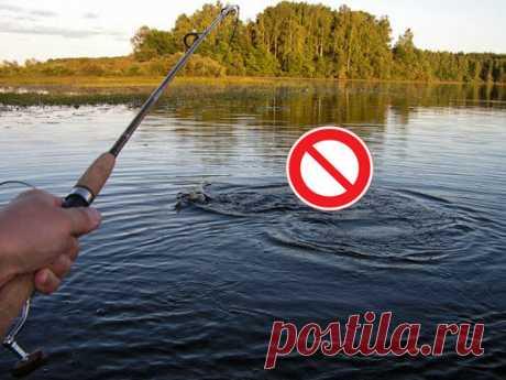 Что запрещается рыбакам во время нереста? Просто и понятно отвечает юрист | Рыбак Мишаня | Яндекс Дзен