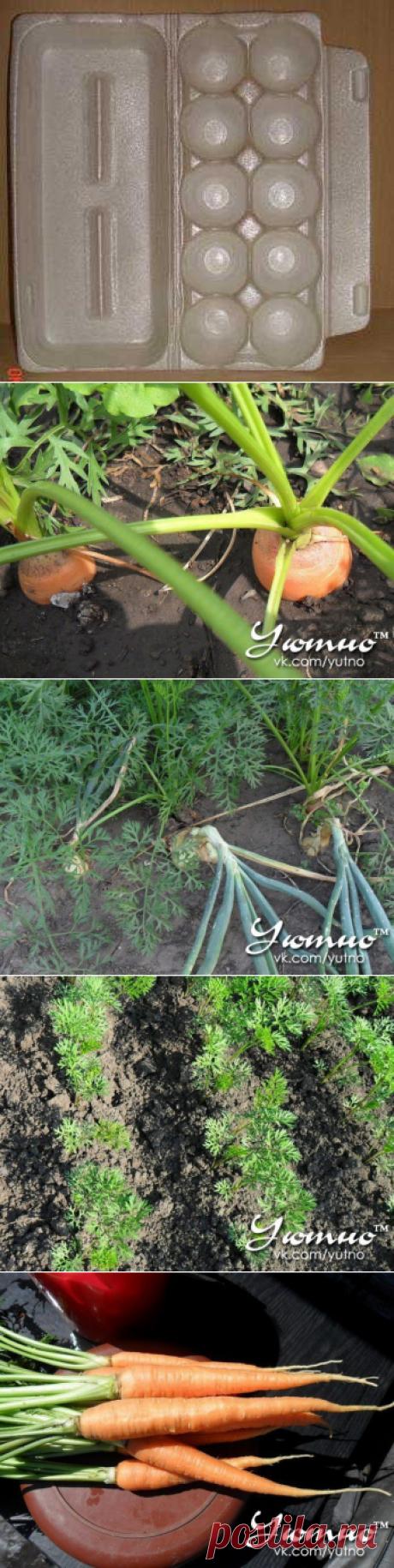 Как получить хороший урожай моркови  Способ посадки в размеченные лунки используется, в основном, для дражированных семян. Выровненная и подготовленная грядка размечается с помощью специального приспособления – чаще всего это упаковка для яиц с ячейками.