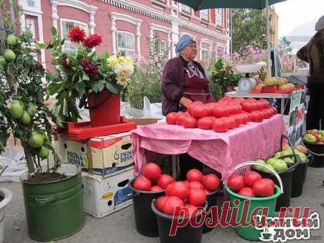 Волшебный бальзам для роста помидор В бочку (200-300 литров