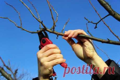 Обрезка сливы осенью – схема для начинающих, инструкции с видео