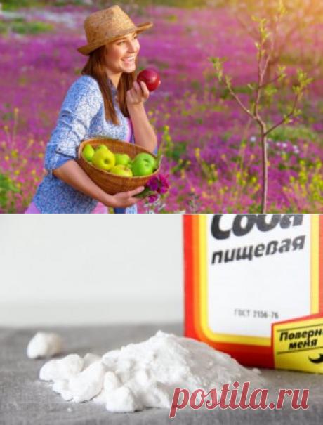 10 способов применения пищевой соды на даче | Огород.ru