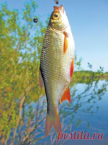 Разные способы ловли рыбы летом