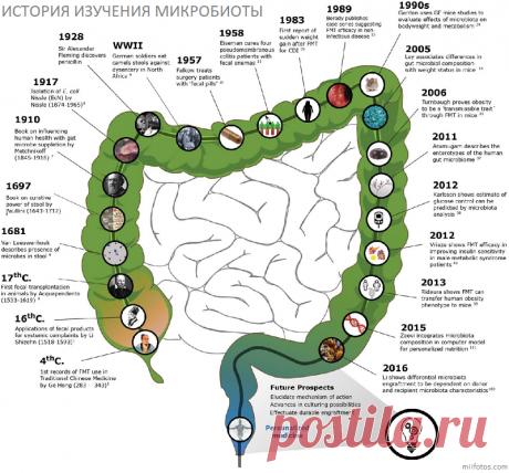 Микробиота ожирения - ПолонСил.ру - социальная сеть здоровья - медиаплатформа МирТесен