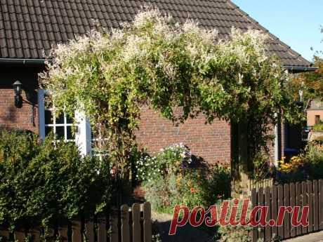 Живой забор на даче: 15 быстрорастущих растений для создания изгороди — Roomble.com