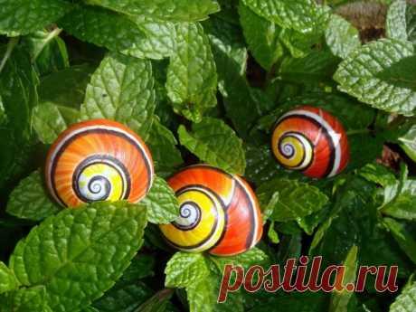polimity — los caracoles pintados