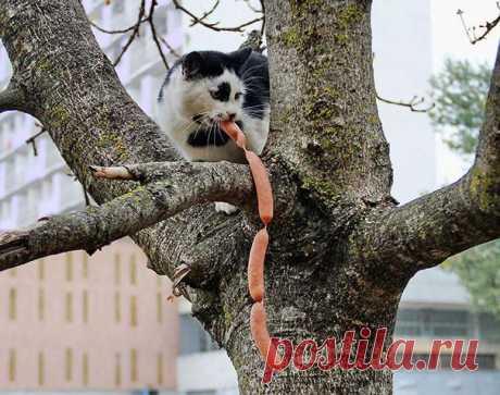 Коты попались с поличным… Невероятно смешно! Ну очень смешные котики-хулиганы: