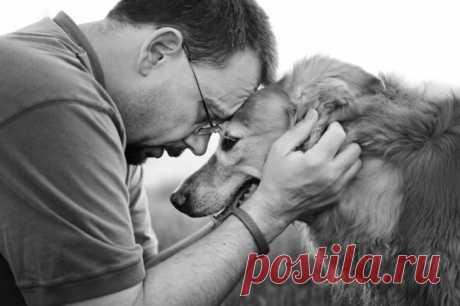 La carta del perro que envejece