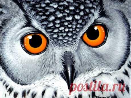 «Большие глаза» — карточка пользователя Любовь Г. в Яндекс.Коллекциях