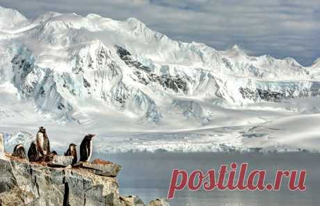 АНТАРКТИЧЕСКИЕ МЕТКИ Трудно представить, но больше четверти площади Антарктиды составляют горы высотой до 4-х тысяч метров, около трети – до 3-х. Один из семи 5-тысячников планеты - пик Винсона – тоже находится в Антарктиде. Но ассоциации самого высокого континента земли не связаны с горами.