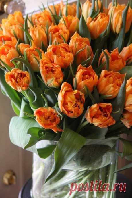"""""""К чему серчать, когда на свете есть цветы?""""  Фрэнсис Бернетт """"Таинственный сад"""""""
