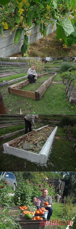 Урожайные грядки от Игоря Лядова | Самоцветик