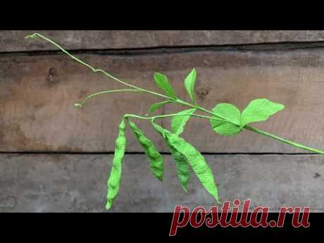 ABC TV | How To Make Pea Branch From Crepe Paper - Craft Tutorial