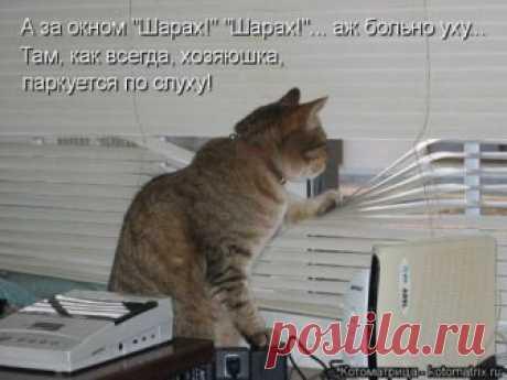 Лучшая котоматрица недели (30 фото) Свежая порция самых лучших котоматриц, которые появились на этой неделе на популярном сайте!Всем приятного просмотра и отличного настроения!