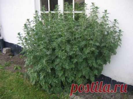 5 народных рецептов из трав для печени