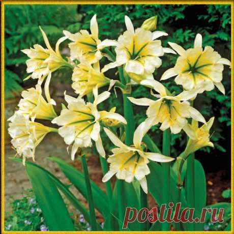 50 растений с желтыми цветами - Жизнь - театр - медиаплатформа МирТесен