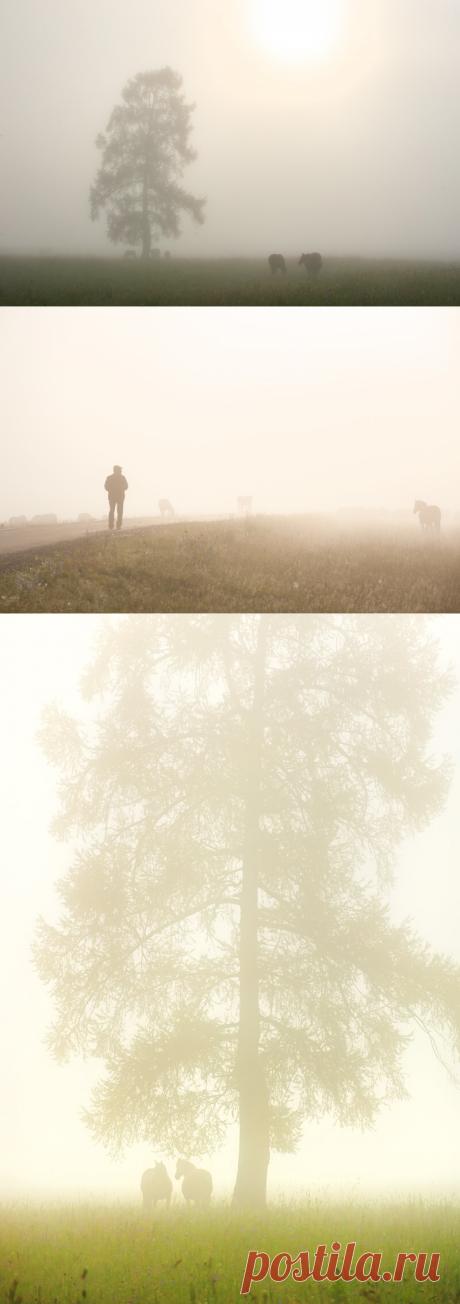 """Лиричное утро в горах. """"Туманная"""" история создания крутого кадра   Фотопутешествия   Яндекс Дзен"""