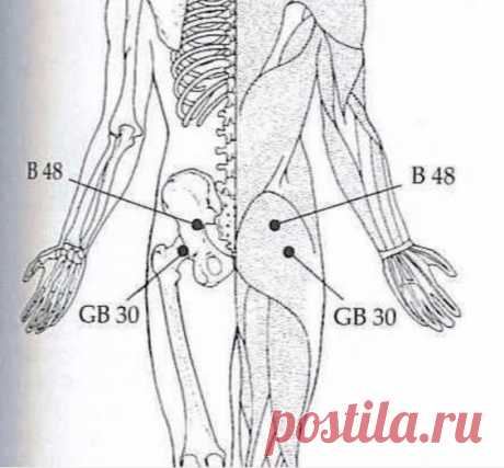Press these 2 points and you will get rid of waist, coxofemoral joint, legs pain and not only …