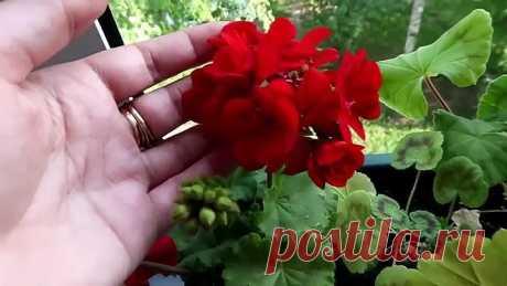 Хотите роскошный цветник в квартире или доме? Вам поможет АЛОЭ!