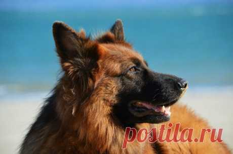 3 удивительные истории о собаках