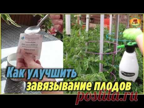 Вот как улучшить завязывание плодов томатов и огурцов. Опрыскивание овощей борной кислотой - YouTube