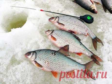 Ловля плотвы в марте Сама по себе плотва является рыбкой не очень большой, но при этом она весьма вкусна. Распространена данная рыбка практически по всем водоемам, в разных регионах ее могут называть по-разному – плотв…