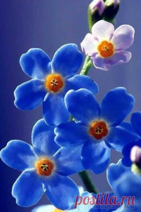 Хочу к тебе (Стих) Хочу к Тебе !    На долго, на года.   Укрыться от невзгод,   Пурги, метелей.   И поселиться в    Сердце навсегда.   И праздновать   С тобою новоселье.   И быть согретой...