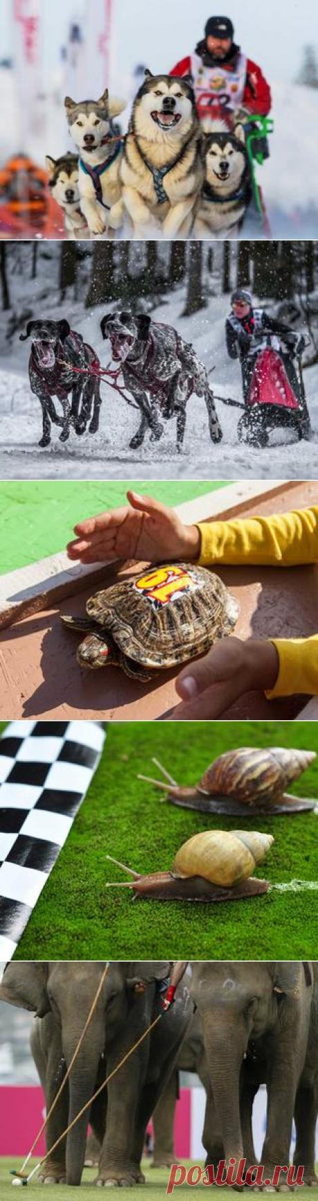 О спорте в животном мире | Зооляндия