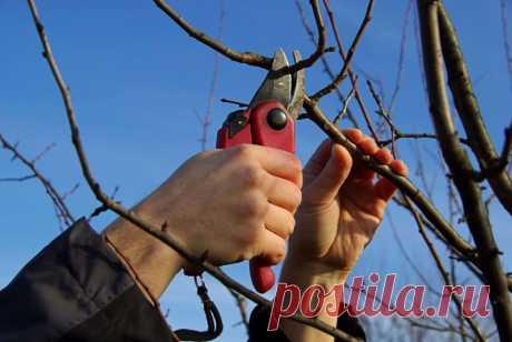 Как защитить плодовый сад от вредителей и болезней: план обработок на весь сезон