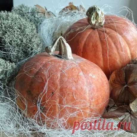Хранение тыквы и кабачков на зиму | Мой огород | Яндекс Дзен