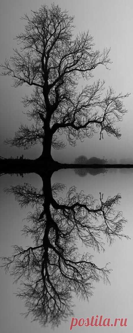 Ben Barrett приколол(а) это к доске The Beauty of Trees II
