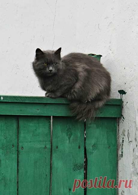 #на_заборе   #кошки
