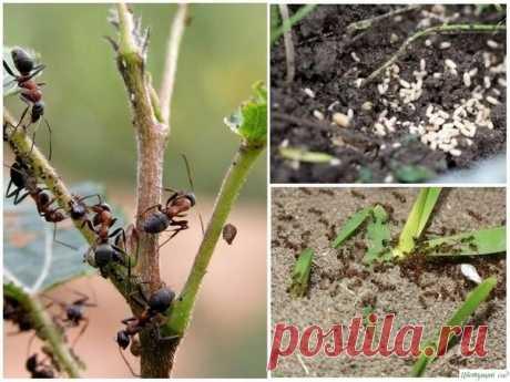 La lucha contra las hormigas