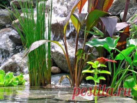 Растения для водоемов. Список растений для прудов, берегов ручьёв с названиями и фото - Ботаничка.ru