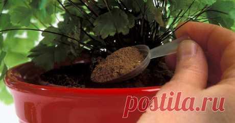 Эти лучшие домашние подкормки вернут жизнь даже сухому кусту! 1 ч. л. сразу... Только натуральные удобрения.