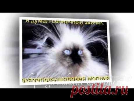 (+1) тема - Песня Кота менестреля | Четвероногий юмор