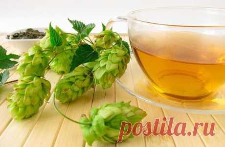 Необыкновенный, но забытый чай   Чай с хмелем был с давних времен известен русскому человеку. Он обладает не только уникальным вкусом, но еще и множеством целебных свойств. Аромат этого чая очень приятный.  Хмель содержит в своем составе вещества, которые называются флавоноидами. Они способствует укреплению костей, помогают при лечении заболеваний онкологического характера, а смолы растения способствуют более быстрому и эффективному заживлению ран.  Если шишки растения ист...