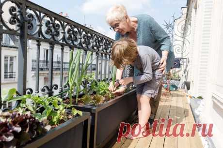 Владелец задумался о занятиях, которые развлекут и обучат детей чему-то новому. Тогда он решил устроить на балконе домашний огород