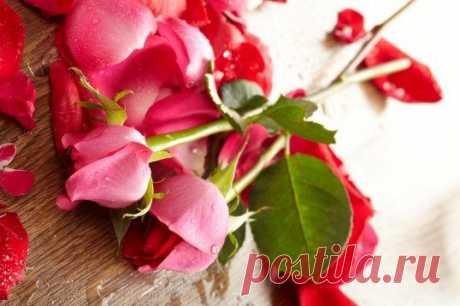 Обыкновенное чудо: как вырастить розу из букета / Домоседы