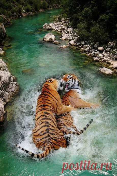 Animal life– Google+