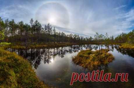 Солнечное гало на севере Ленинградской области. Автор фото: Фёдор Лашков.