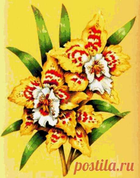 Предпросмотр - Схема вышивки «желтые цветы» - Автор «MorningBeauty» - Авторы - Вышивка крестом